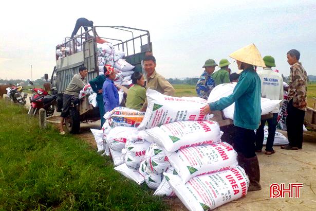 """Thu mua lúa tươi tại ruộng, doanh nghiệp """"chạy"""" bão cùng nông dân Hà Tĩnh"""