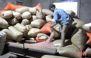 Doanh nghiệp xuất khẩu lạc lớn nhất Hà Tĩnh thu hàng chục tỷ mỗi năm